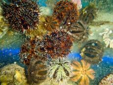 MORSKI JEZ morski jezi bali