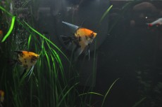 tropske ribe