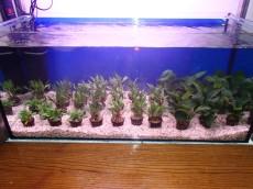 vodne rastline