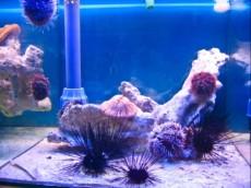 morski jez