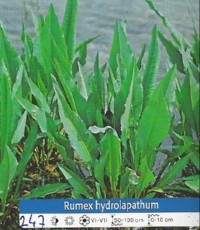 Rastlinski filter - Rumex Hydrolapathum