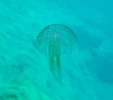 meduza Grcija
