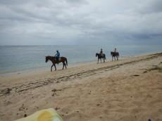 konji na plazi