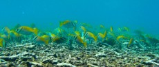 fish Thailand