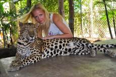 leopard show
