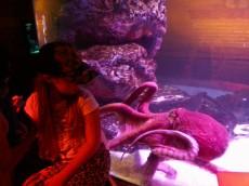 ogromna hobotnica