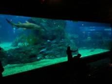 velik akvarij