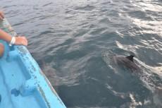 prijatelj delfin