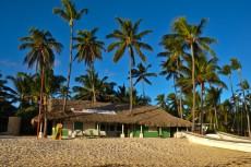 palme ob plazi