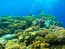 koralni greben iberotel club fanara