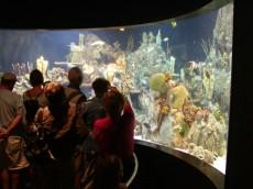 ogromni akvarij