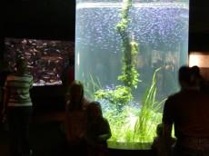 ovalni akvarij