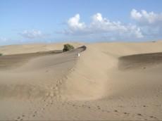 puscava Gran Canaria