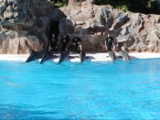 sov z delfini