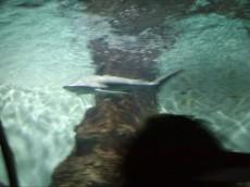 tunel akvarij