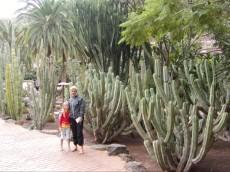 veliki kaktusi