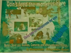 31 DONT FEED THE MONKEYS
