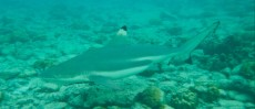 ROBERT LEITINGER AND BLACKTIP SHARK ON THAILAND
