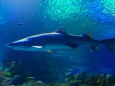 SHARK KUALA LUMPUR