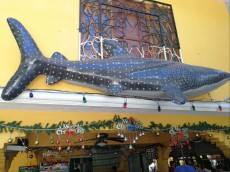 WHALE SHARK WATCHING OSLOB CEBU
