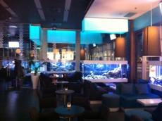 akvarij v lokalu