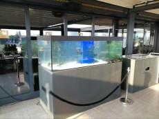 akvarij za jastoge