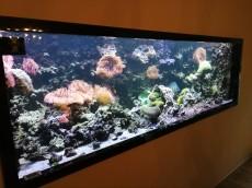 blenda za akvarij