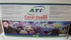 coral ocean morska sol
