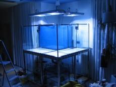 morski akvarij oblike crke L