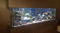 morski biotop