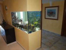 prodaja koral