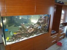 prodajalna rib