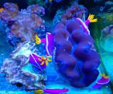 trgovina z akvariji