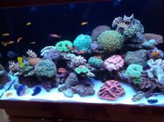 trgovina z morskimi akvariji