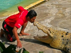 Crocodil farm sov z krokodili