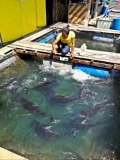 Kilim geoforest park Snevarne ribe