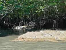 Kilim geoforest park dzungla Langkawi