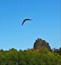 Kilim geoforest park eagle Langkawi