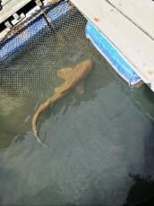 Kilim geoforest park morski pes Langkawi