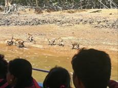 Kilim geoforest park nevarne opice
