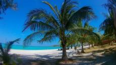 Ko Lipe palm