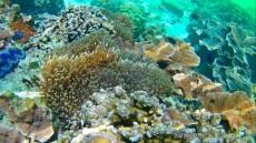 coralreef Thailand