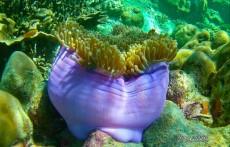 coralreef danger gif