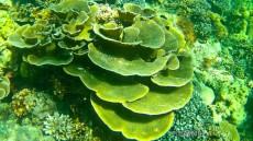 coralreef gopro Ko Lipe