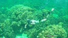 coralreef snorkeling Ko Lipe