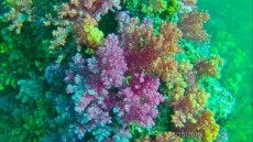 coralreef strong current
