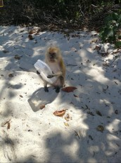 izlet danger monkey Ko Lipe