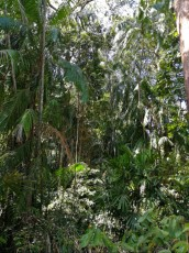 najlepse plaze naravni habitat Tajska