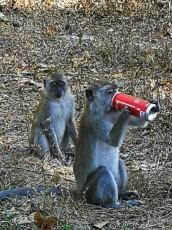 trip opicje norcije