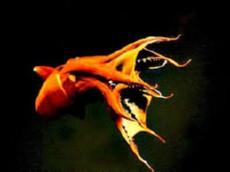 vampirski ligenj